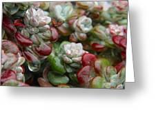 Succulent Rain Greeting Card