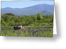 Sugar Hill Horse Tour And Lupines Greeting Card