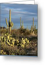 Suguaros At Sunset Greeting Card