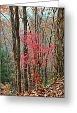 Sumac In Morning Light At Cumberland Falls State Park Greeting Card