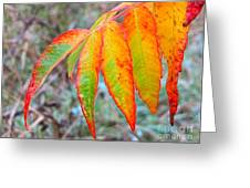 Sumac Leaves After The Rainfall Greeting Card