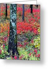 Sumac Slope And Lichen Covered Tree Greeting Card