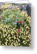 Summer Alpine Flowers Greeting Card