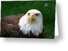 Summer Bald Eagle  Greeting Card