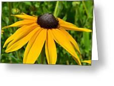 Summer Black Eyed Susan Flower Greeting Card