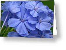 Summer Blues Greeting Card