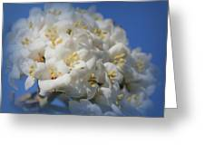 Summer Bunches Greeting Card