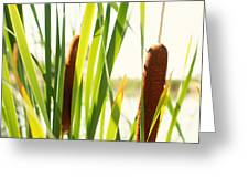 Summer Cattails Greeting Card