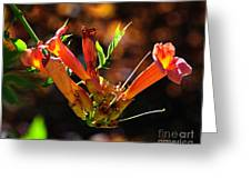 Summer Color Glow Greeting Card