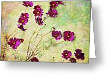 Summer Cosmos Greeting Card