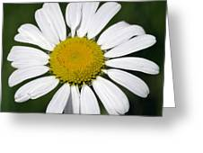 Summer Daisy  Greeting Card