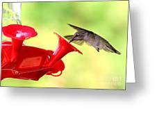 Summer Fun Hummingbird Greeting Card