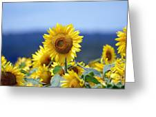 Summer Gold Greeting Card