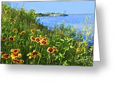 Summer In Toronto Park Greeting Card by Elena Elisseeva