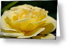 Summer Loves A Rose Greeting Card