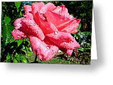 Summer Shower Stunner Greeting Card