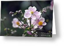 Summer Softness Greeting Card