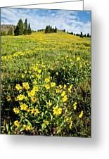 Summer Splendor In Yellowstone Greeting Card
