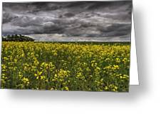 Summer Storm Clouds Over A Canola Field Greeting Card