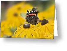 Summer Stunner Greeting Card
