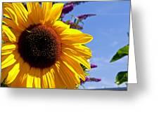 Summer Sunflower Greeting Card