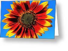 Summerflower Greeting Card