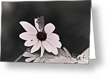 Summers Memory Greeting Card