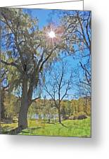Sun And Trees - 4 Greeting Card