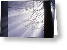Sun Breaking Through Mists Greeting Card