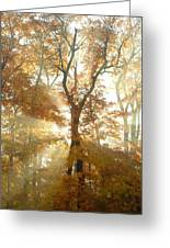 Sun Breaking Through Trees Greeting Card