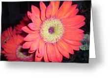 Sun Burst Greeting Card