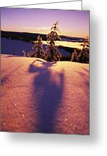 Sun Casting Shadows On Snow Covered Greeting Card