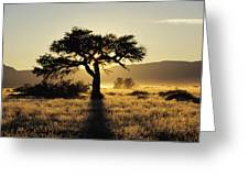 Sun Coming Up Behind A Tree In African Greeting Card