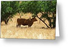 Sun Dappled Cow Greeting Card