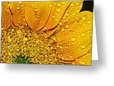Sun Flower Greeting Card