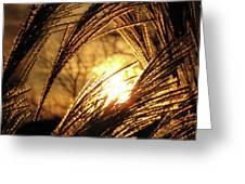 Sun In Grass Panoramic Greeting Card
