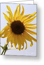 Sun Kiss Greeting Card
