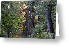Sun Light In The Woodland  Greeting Card
