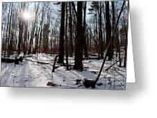 Sun On The Wild Turkey Trail Greeting Card