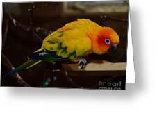 Sun Parrot Greeting Card