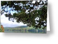 Sun Pine 2 Greeting Card