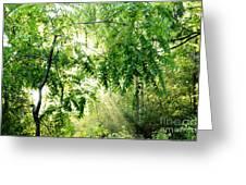 Sun Rays Through Black Walnut Leaves Greeting Card