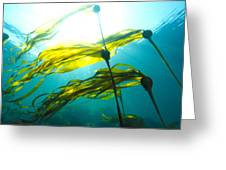 Sun Shines Through Bull Kelp Greeting Card