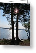 Sun Shining Through Trees Greeting Card