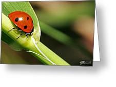 Sunbathing Ladybug Greeting Card
