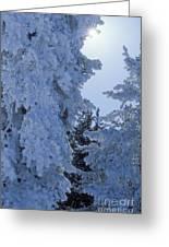 Sunburst In Yellowstone Greeting Card