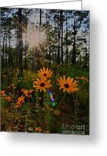 Sunburst On Sunflowers Greeting Card