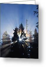 Sunburst Through Silhouetted Pine Trees Greeting Card