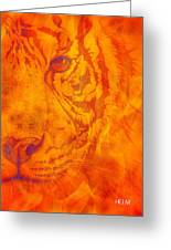 Sunburst Tiger On Fire Greeting Card
