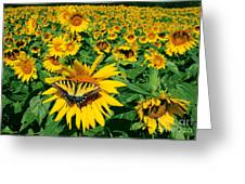 Sunday Afternoon Greeting Card by Gina Signore